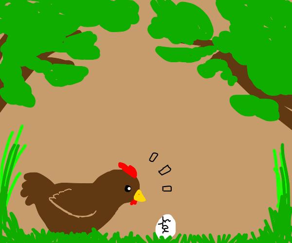 chicken watches egg hatch