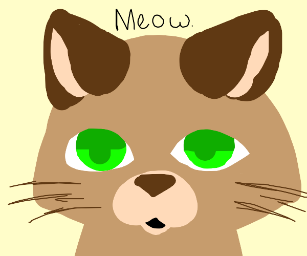 Cat stares vacantly at the viewer, and meows