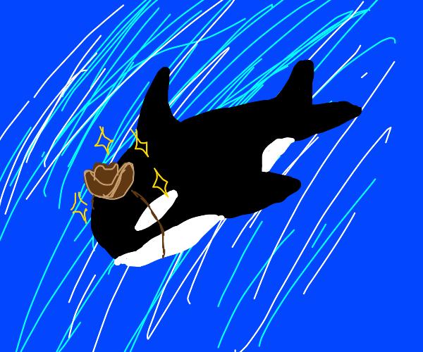 cowboy orca