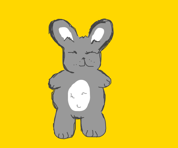 Grey bunny with white belly