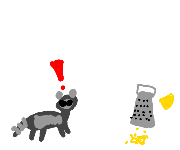 racoon is afraid of cheese grater