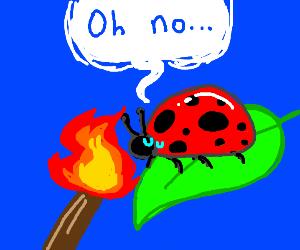 torching a ladybug