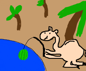 Camel fishing with a Watermelon