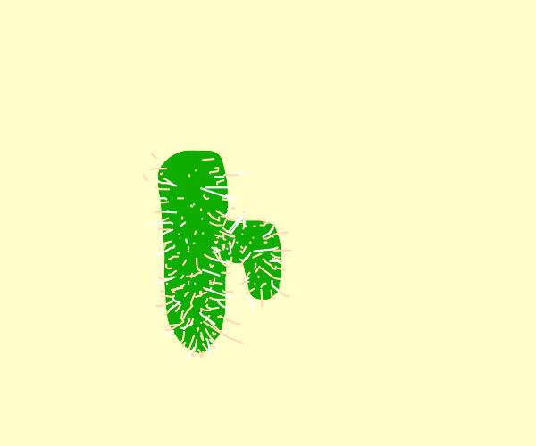 Australian cactus