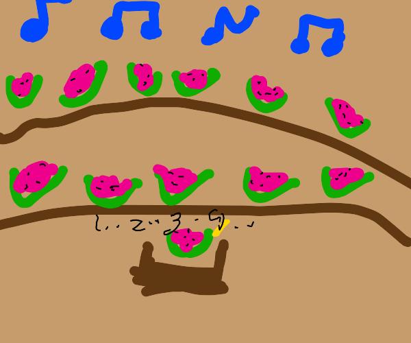 watermelon band with watermelon maestro