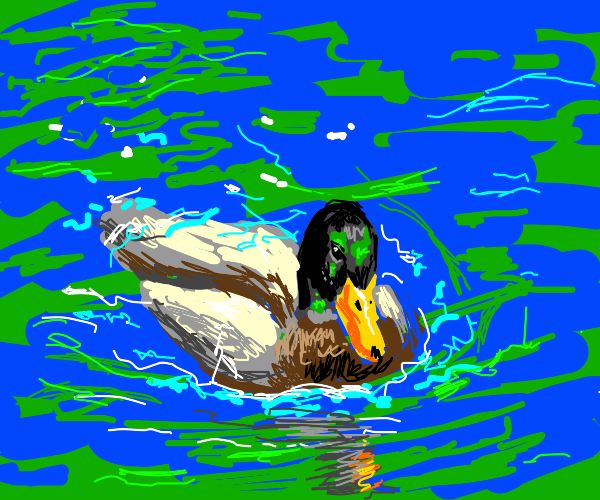 Duck swims in a river by itself