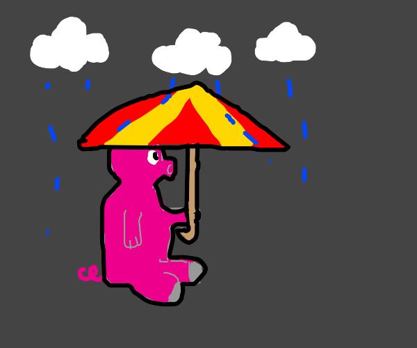 pig in the rain