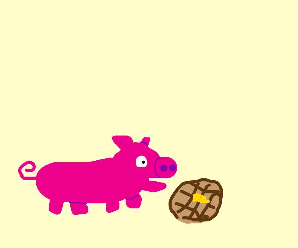Pig eats waffles