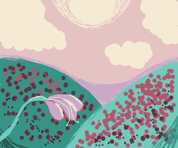 Morning sun shines over flower fields