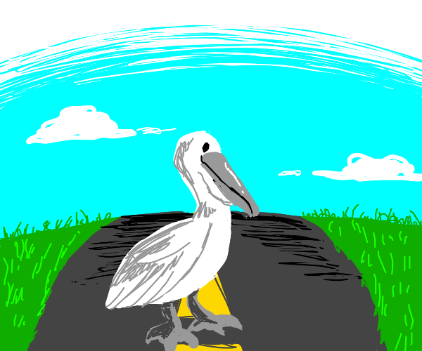A pelican on the road.