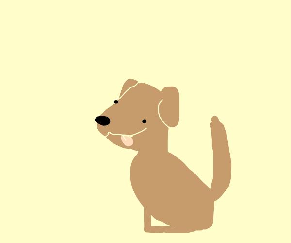 Dog timeo
