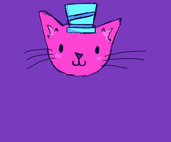 Cute cat in the hat