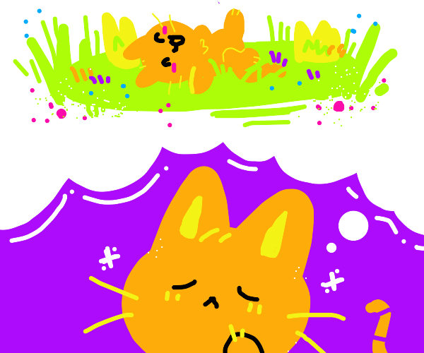 orange cat wants to play in grass.