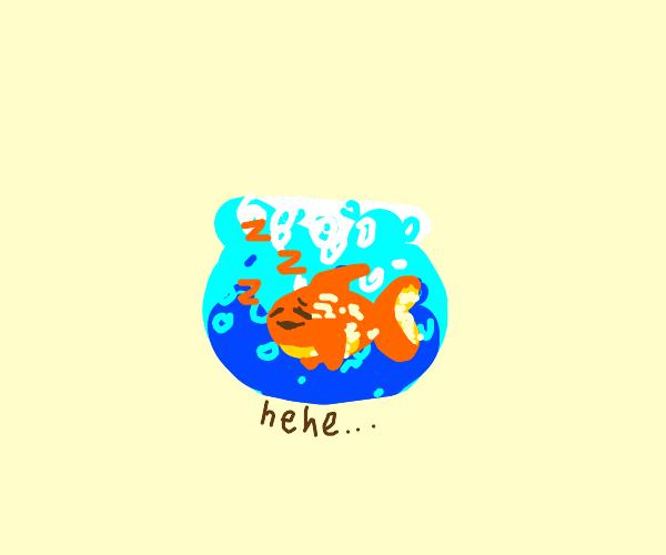sleepy fish laughs