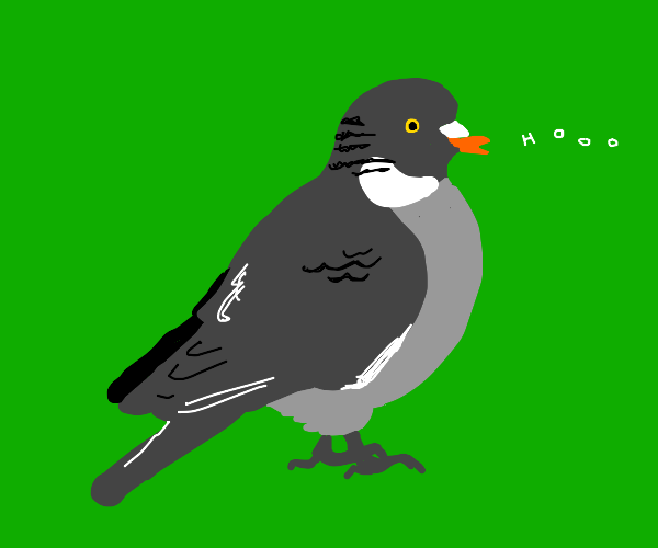 Pigeon cooing