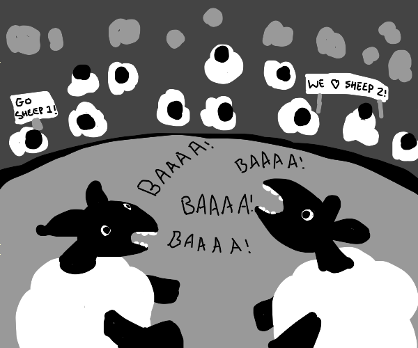 sheep baa competition
