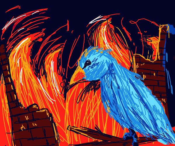 the blue bird watches the remnants of war