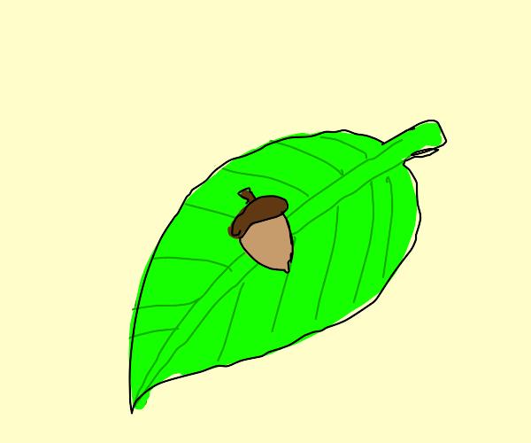 Nut on a leaf