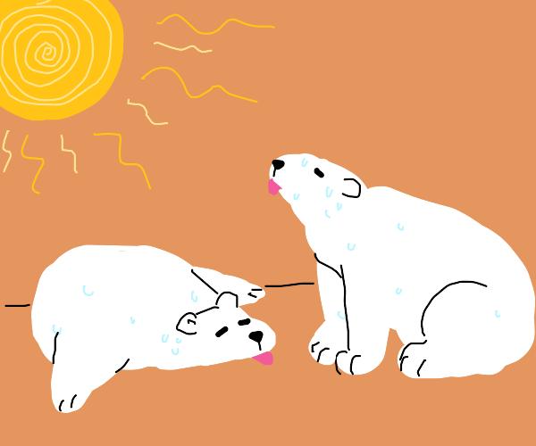 Hot polar bears