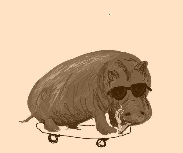 a pretty cool hippo
