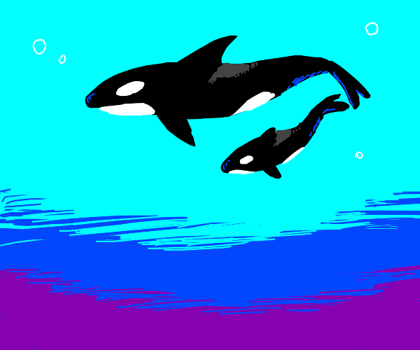 A pod of orcas. just friends