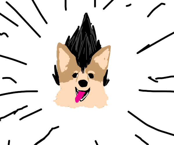 Corgie with big black anime hair