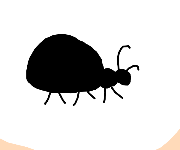 thicc ant