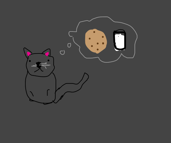 Cat has cookies on the brain