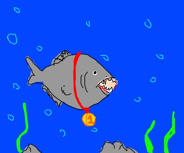first place piranha
