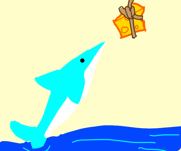 Shark jumps for cheese