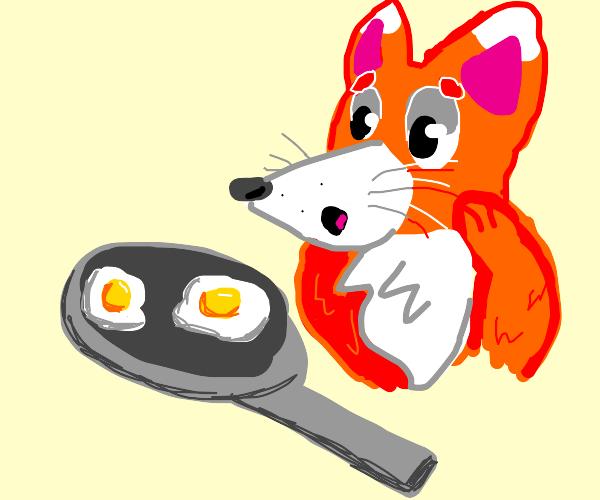 Fox fears frieing eggs