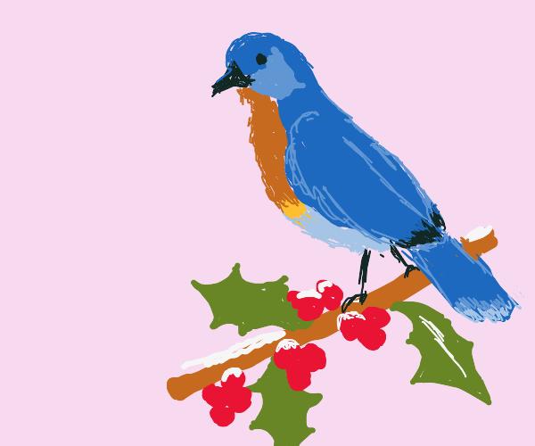 Eastern Bluebird on a snowy stem of holly