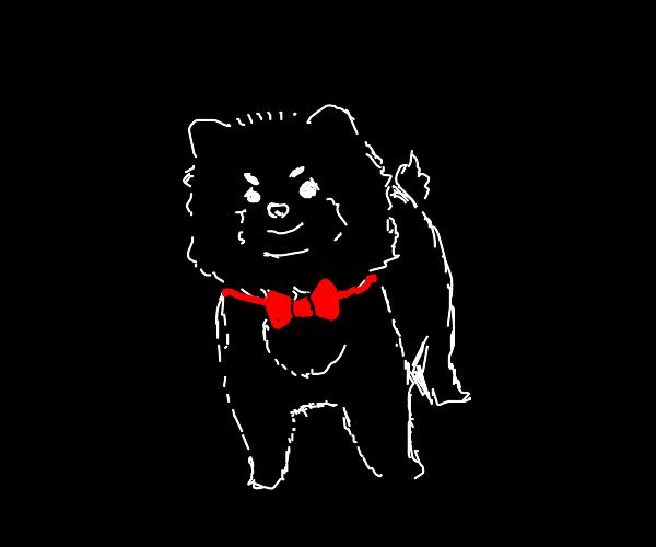 A fluffy little good dog