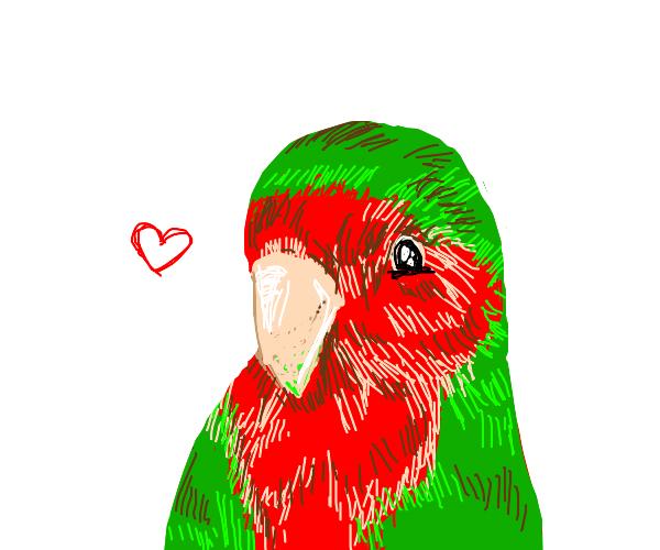 a very cute parrot