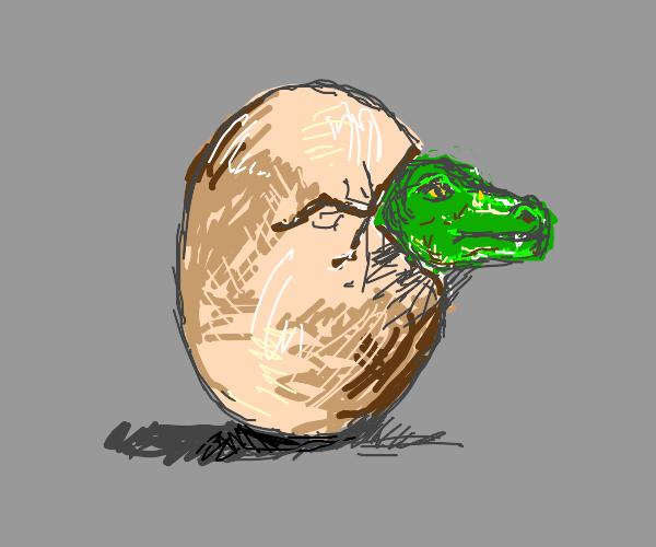Hatching croc