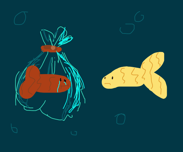An ocean fish looking at a fish in a bag