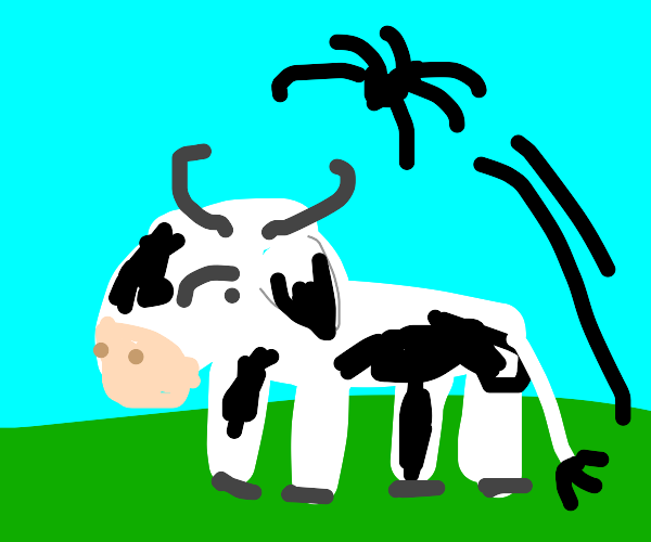 Spider leaps over a cow