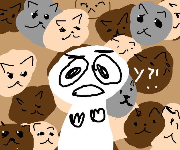 Why are there so many cats?!