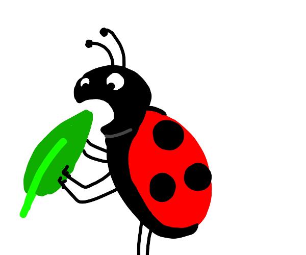 ladybug eats a leaf