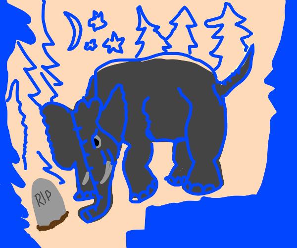 Elephant in mourning