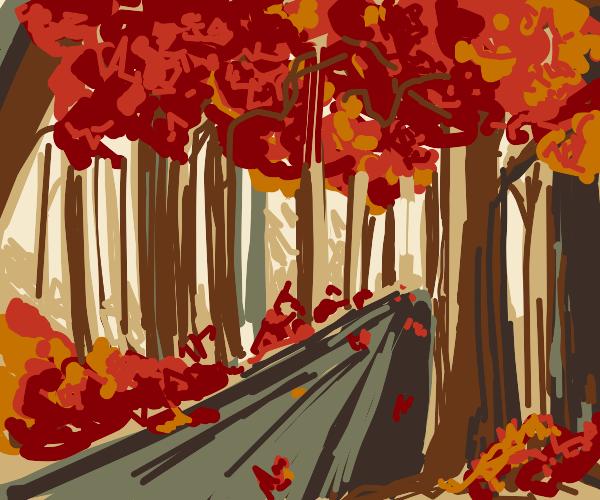 An autumn road