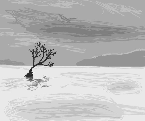 Desolate tree in a white universe