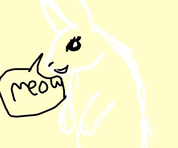 rabit go meow