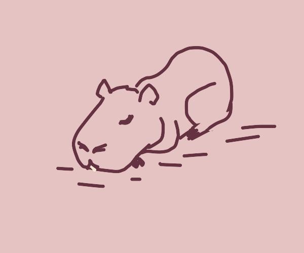 capybara taking a nap