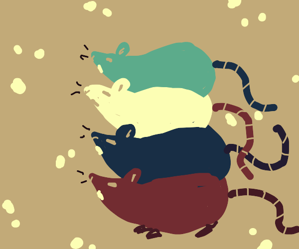 4 rats on each others