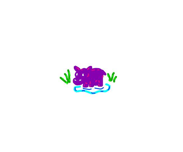 Smol hippo