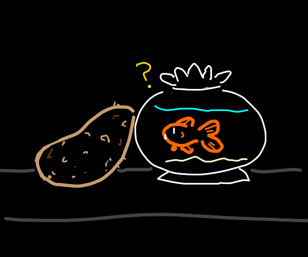 goldfish confused by potato