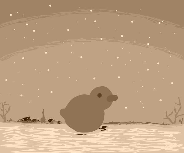 Duck in Fall or Winter