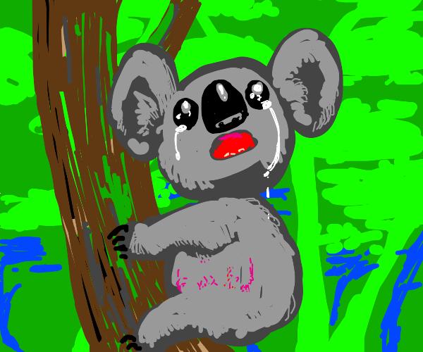 cute koala bear cries and has stress marks