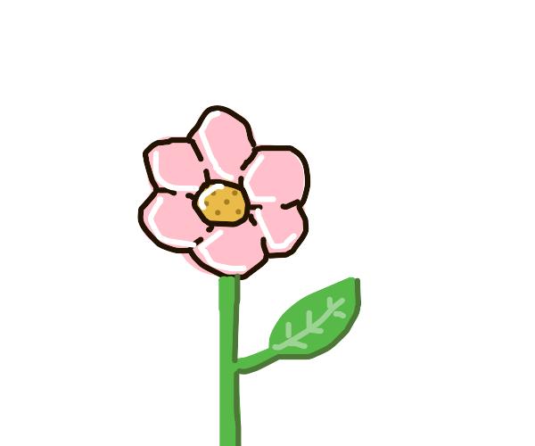 Flower (BfDI/BFB)